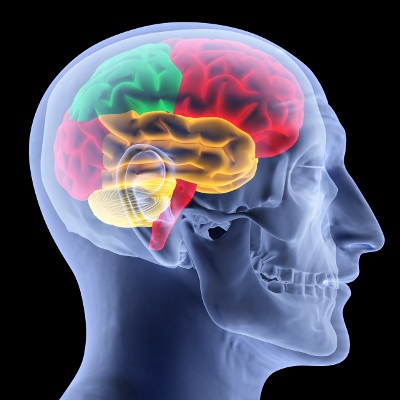 myth-on-human-brain